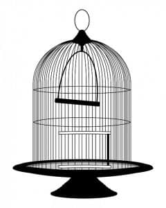 tips to sound dampen your bird's cage