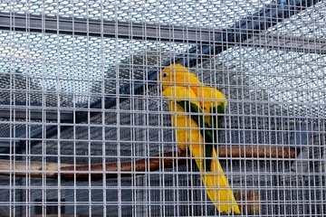 How to Soundproof a Bird Cage